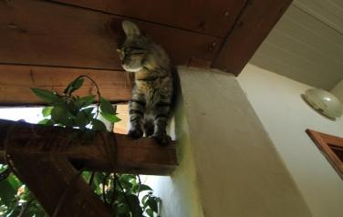 IMG_2894.JPG: gattino