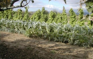 coltivazioni.JPG: ortaggi